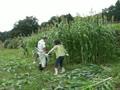 動画:第3回小谷村ワークキャンプの記録